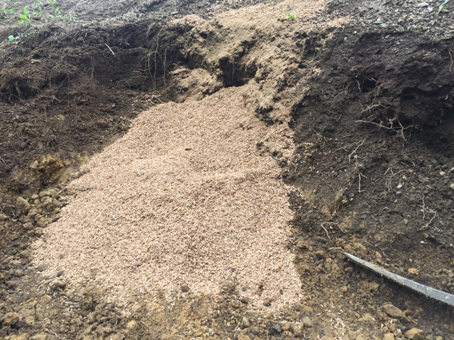 畑を深耕して、乳酸菌もみがらぼかしを鋤き込む