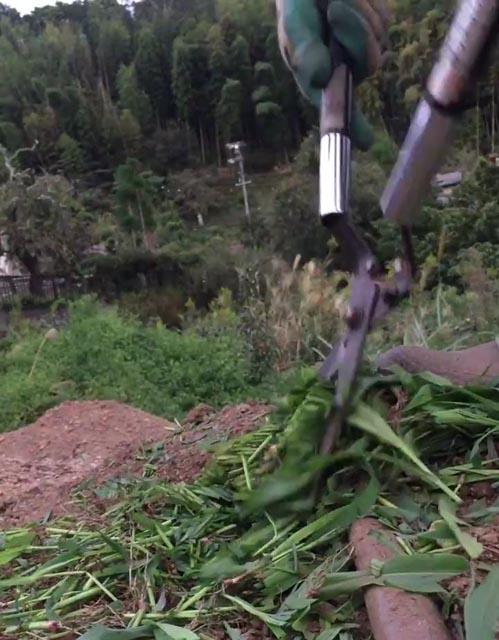 緑肥を刈り込み鋏で切り刻む